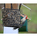 woodpecker finch feeder bird