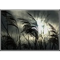 westhay somerset nature grass sky somersetdreams