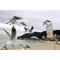 the place is heunde of second busan city ......many seagul is flying up and down....pointless....