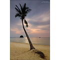 beach sea tropical palm coconut Tioman Island