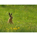 wildlife mammal scotland farmland nature
