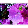 Pink Flower Plant Nature