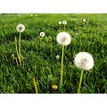 flower weed grass spring