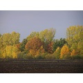 Series Nature Trees Autumn