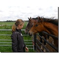 netherlands naardermeer horse people child nethx naarx horsx chilx peopx
