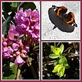 flower bergenia bee butterfly collage bandsixshadowclub