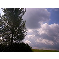 tree clouds sky