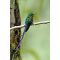 birds hummingbird Bellavista Ecuador Andes CloudForest