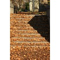 Leaves covered steps in the fall Kelly Drive