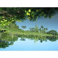 reflection sky nature water Flowers blue scenery
