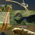 Wetlands Collage