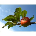apple fruit France autumn sky tree