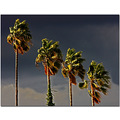 sky clouds weather palms trees wind socal