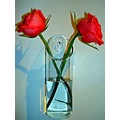 roses two rose flowers flower vase together apart love