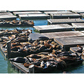 sfharborfph3 sanfrancisco pier39 sealions waterfront restfriday