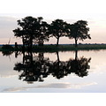ChobeRiver Botswana Africa Travel Trees Reflections