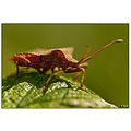 insect nature bug