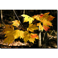 fall foliage leaves yellow red