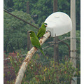 View from my office windows.  These parrots come every day to talk (to each other or with me??)