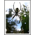 spider insect nature