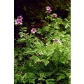 2009 portugal madeira flora random old photos forest plant flower myownfav