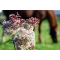 nature flowers horse