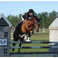 horses can really jump hey its my 200th photo yay