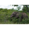 vacation africa krugerpark elephants