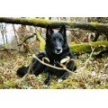 Animal Animals Dog Dogs BlegiumSheperd Bonita Blackdog