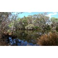 reflectionthursday stitched view Canning River perth littleollie