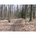 woods trees trail spring