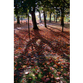 woodhouse moor leeds autumn compautumn07