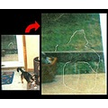 pug dog door ghost paranormal photo spirits