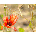 wild flower nature reserve insect alora casaimaginecom spain hills retreat