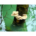 nature fungi harrison river reflectionthursday