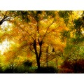 Autumn yellow warm landscape tree Mariamel