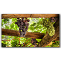 grape vine nature