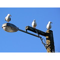 seagulls lamppost sky light