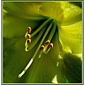 flower greenyellow ligh macro
