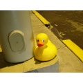 giant lost rubber duck