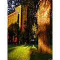 Tree texture park light shadows building archer