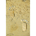 sand stone footprint traces summer nikon sigma beach sea varna bulgaria