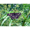 narure butterfly