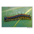 macro caterpillar colour spring leaf nature greece