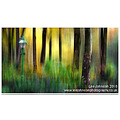 Fine art abstract woodland autumn colours spideyj