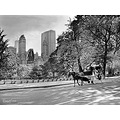 centralpark NYC carriage horse city trees bw blackwhite