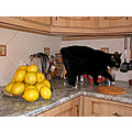 cat home andalucia kitchen
