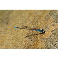 colorful Dragonfly !!