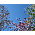 trees bluesky spring nature naturefph