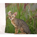 cats animal nature kitten